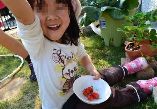 収穫イチゴ宿題
